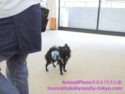 子犬のしつけ教室「犬のようちえん駒沢公園教室」授業参観5