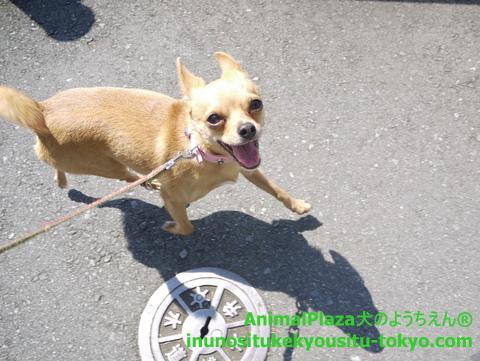 子犬のしつけ教室「犬のようちえん駒沢公園教室」光くん3