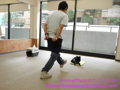 子犬のしつけ教室「犬のようちえん駒沢公園教室」授業参観6