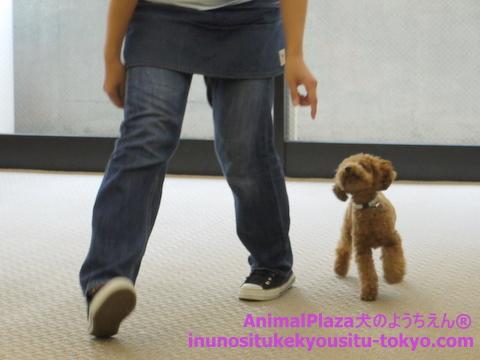 子犬のしつけ教室「犬のようちえん駒沢公園教室」授業参観7