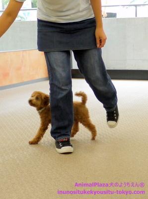 子犬のしつけ教室「犬のようちえん駒沢公園教室」授業参観8