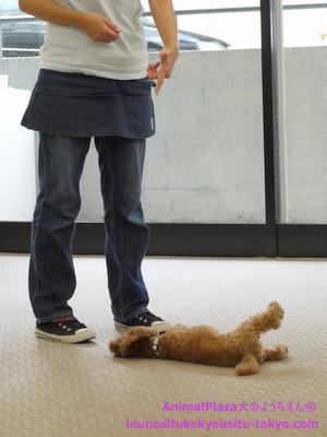 子犬のしつけ教室「犬のようちえん駒沢公園教室」授業参観9