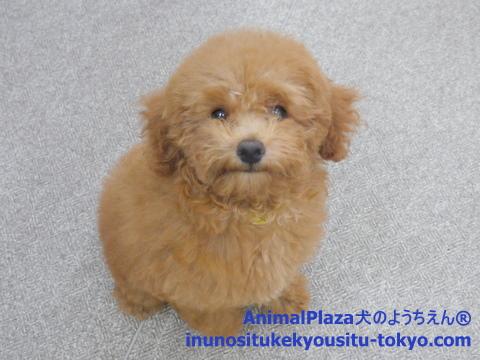 子犬のしつけ教室「犬のようちえん駒沢公園教室」通園生紹介