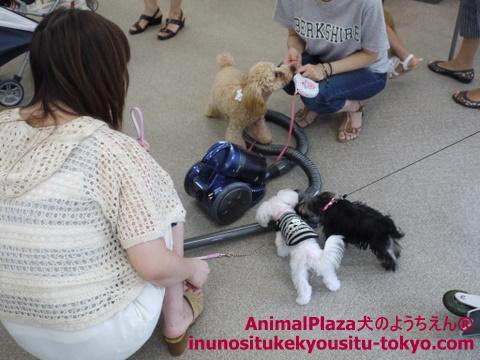 子犬のしつけ教室「犬のようちえん駒沢公園教室」9月11日パピーパーティー