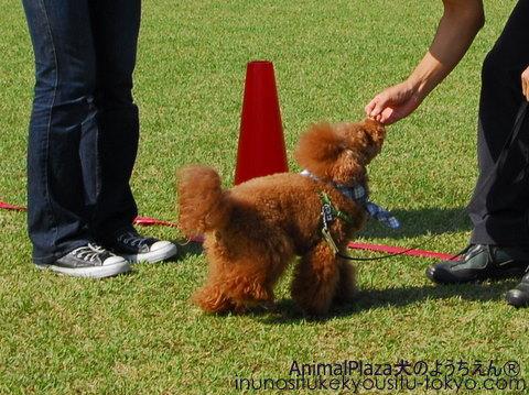 子犬のしつけ教室「犬のようちえん駒沢公園教室」運動会②