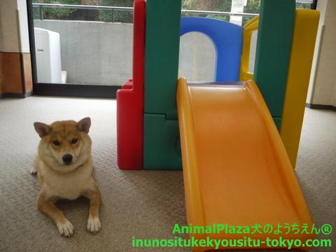 子犬のしつけ教室「犬のようちえん駒沢公園教室」