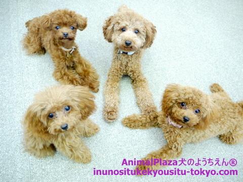 子犬のしつけ教室「犬のようちえん駒沢公園教室」チョコたん3