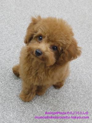 子犬のしつけ教室「犬のようちえん駒沢公園教室」八太郎くん1