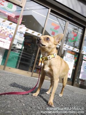 子犬のしつけ教室「犬のようちえん駒沢公園教室」都立大学駅