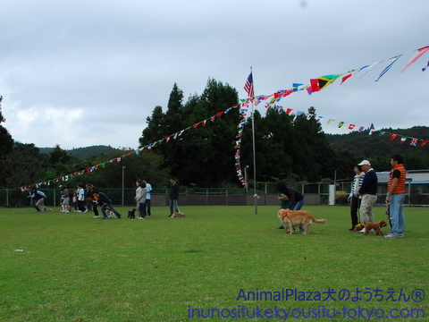 子犬のしつけ教室「犬のようちえん駒沢公園教室」運動会
