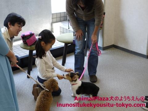 子犬のしつけ教室「犬のようちえん駒沢公園教室」パピーパーティー3
