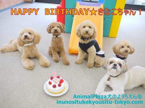 子犬のしつけ教室「犬のようちえん駒沢公園教室」きなこちゃん誕生日2