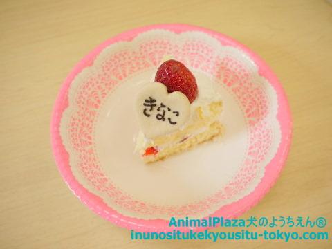 子犬のしつけ教室「犬のようちえん駒沢公園教室」きなこちゃん誕生日3