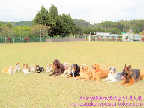 子犬のしつけ教室「犬のようちえん駒沢公園教室」遠足