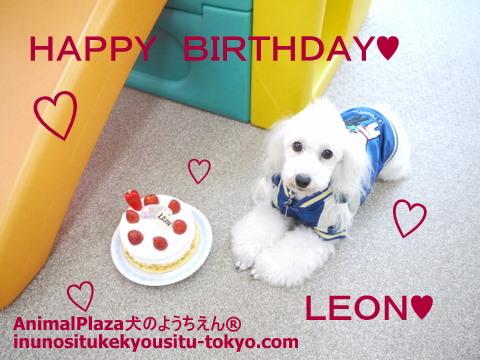 子犬のしつけ教室「犬のようちえん駒沢公園教室」レオンくん