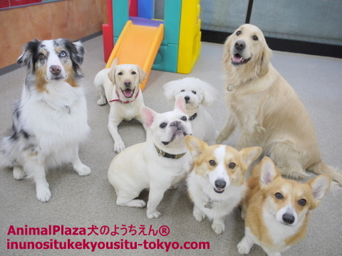 子犬のしつけ教室「犬のようちえん駒沢公園教室」写真