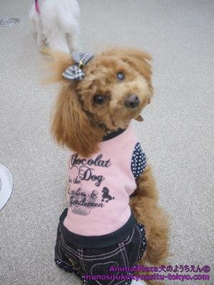 子犬のしつけ教室「犬のようちえん駒沢公園教室」冬のファッションショー