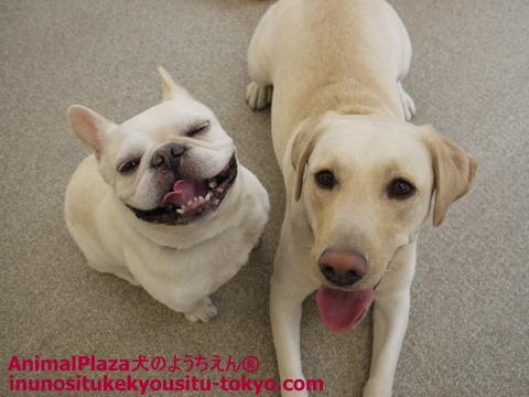 子犬のしつけ教室「犬のようちえん駒沢公園教室」冬場のケア