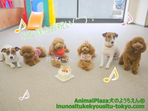 子犬のしつけ教室「犬のようちえん駒沢公園教室」誕生日パーティー