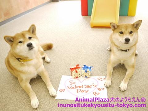 子犬のしつけ教室「犬のようちえん駒沢公園教室」バレンタイン