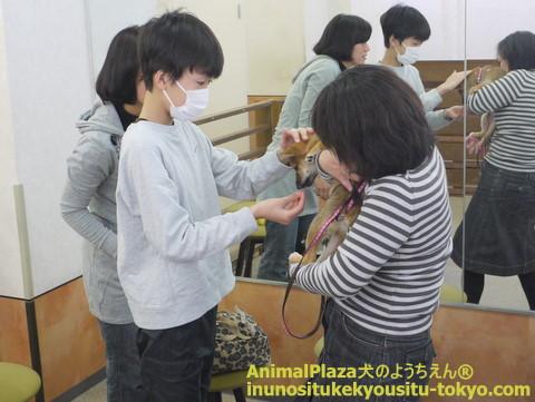 子犬のしつけ教室「犬のようちえん駒沢公園教室」パピーパーティー開催しました!!