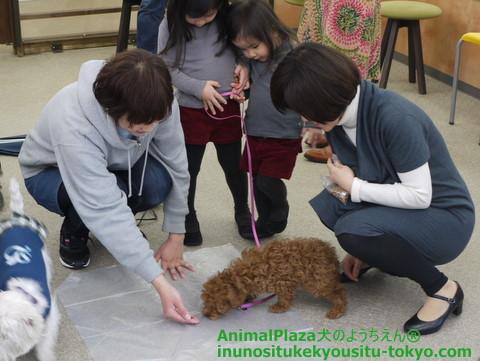 子犬のしつけ教室「犬のようちえん駒沢公園教室」パピーパーティー開催します!!