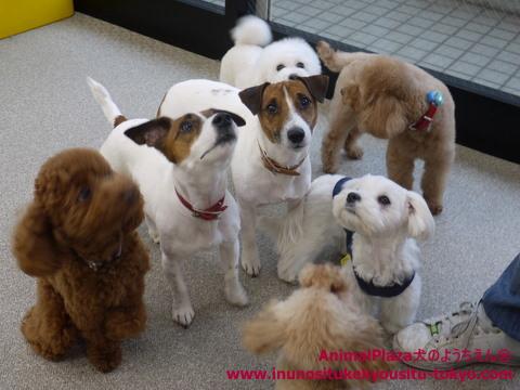 子犬のしつけ教室「犬のようちえん駒沢公園教室」子犬のワクチン