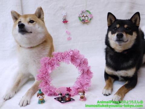 子犬のしつけ教室「犬のようちえん駒沢公園教室」ようちえんの雛祭り♪