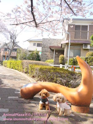 子犬のしつけ教室「犬のようちえん駒沢公園教室」犬のようちえん桜