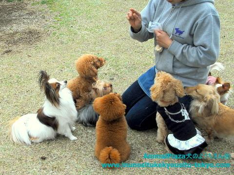 子犬のしつけ教室「犬のようちえん駒沢公園教室」犬のようちえん遠足2