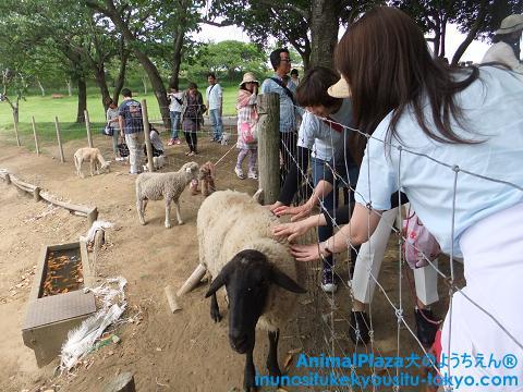 子犬のしつけ教室「犬のようちえん駒沢公園教室」マザー牧場