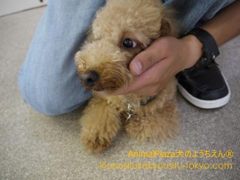 子犬のしつけ教室「犬のようちえん駒沢公園教室」湿気の多い梅雨時期を快適に過ごすためには