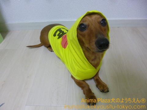 子犬のしつけ教室「犬のようちえん駒沢公園教室」犬にレインコートを着せるための練習方法