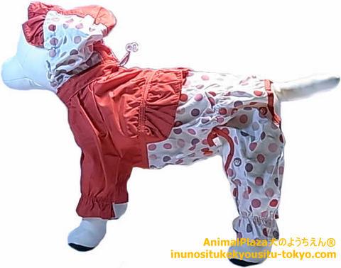 子犬のしつけ教室「犬のようちえん駒沢公園教室」犬のレインコート