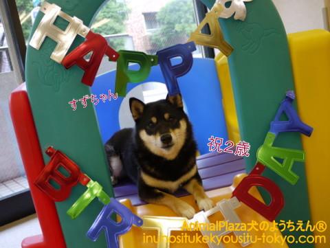 子犬のしつけ教室「犬のようちえん駒沢公園教室」今月お誕生日を迎える通園生♪