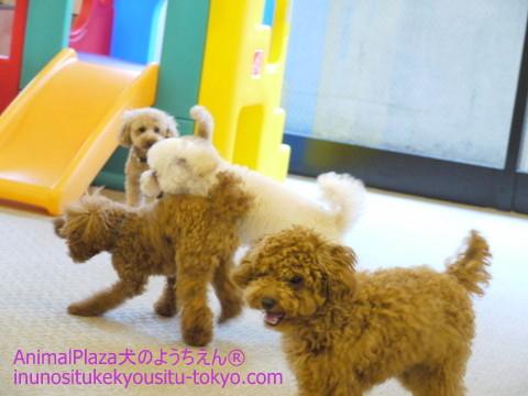 子犬のしつけ教室「犬のようちえん駒沢公園教室」体験入園