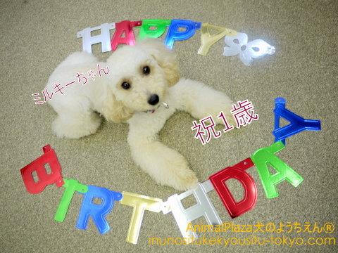 子犬のしつけ教室「犬のようちえん駒沢公園教室」7月生の通園生