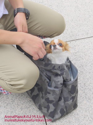 子犬のしつけ教室「犬のようちえん駒沢公園教室」パピーパーティー