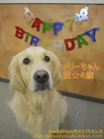 子犬のしつけ教室「犬のようちえん駒沢公園教室」今月お誕生日を迎える通園生
