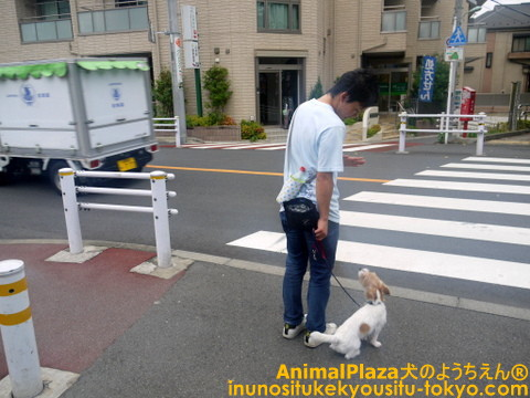 子犬のしつけ教室「犬のようちえん駒沢公園教室」お散歩