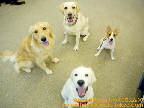 子犬のしつけ教室「犬のようちえん駒沢公園教室」レオくん