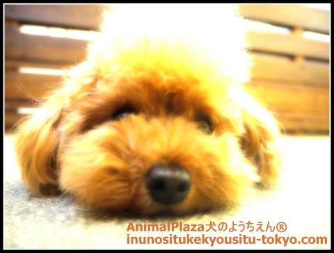 子犬のしつけ教室「犬のようちえん駒沢公園教室」フィラリア投薬時期