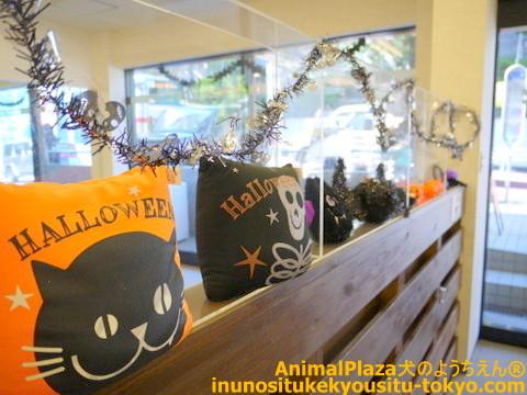子犬のしつけ教室「犬のようちえん駒沢公園教室」ハロウィン