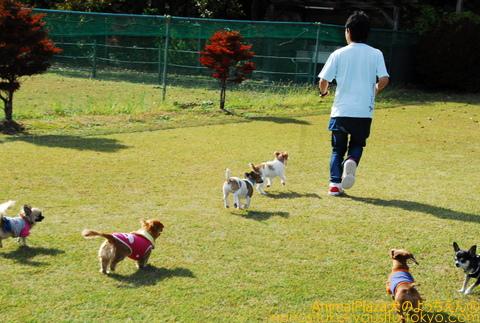 子犬のしつけ教室「犬のようちえん駒沢公園教室」遠足報告@犬のようちえん駒沢公園教室(11/9)