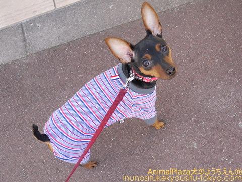 子犬のしつけ教室「犬のようちえん駒沢公園教室」犬の風邪!? くしゃみ・鼻水の症状が出たら・・・