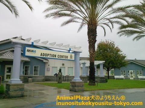 こちらは「ADAPTION CENTER」。新しい飼い主を待つ動物と触れ合える場所です。