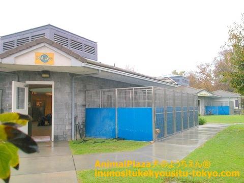 別棟のADAPTION CENTER。外の様子も観察でき、ドッグランなども完備されています。