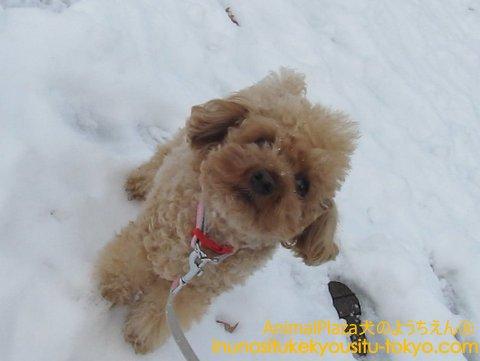 雪って冷たい!