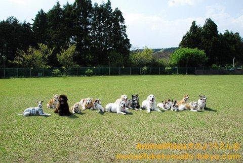 大型犬チーム!