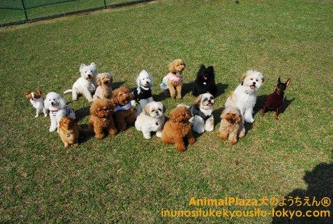 小型犬チーム!